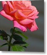 Flowers 186 Metal Print