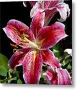 Flowers 733 Metal Print