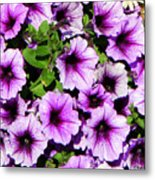 Flowers Alaska July  Metal Print