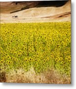Flowers And Horses Near Setinil Spain Metal Print