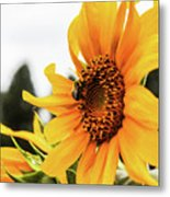 Flowers And The Bees Metal Print