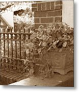 Flowers At St Anthony Park Metal Print