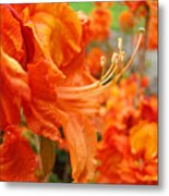 Flowers Azalea Garden Orange Azalea Flowers 1 Giclee Prints Baslee Troutman Metal Print