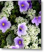 Flowers Etc Metal Print