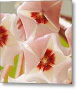 Flowers-hoya 1 Metal Print