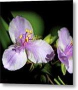 Flowers In Natural Light Metal Print