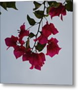 Flowers In The Sky Metal Print