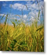 Flowers In The Wheat Metal Print