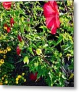 Flowers Of Bethany Beach - Hibiscus And Black-eyed Susams Metal Print