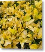 Flowers Of Domitilla Metal Print