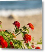 Flowers Of Rhodes Metal Print