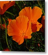 Flowers Of The Andes Metal Print