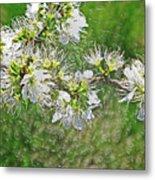 Flowers Of The Blackthorn Shrub Metal Print