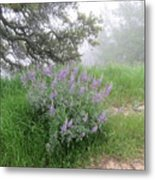 Flowers On A Foggy Day Metal Print