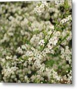 Flowers On A Plum Tree Metal Print