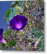 Flowers On Dupont Street Metal Print