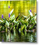 Flowers On The Connecticut Metal Print