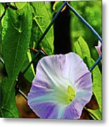 Flowers On The Fence 1 Metal Print
