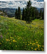 Flowers On The Hillside Metal Print