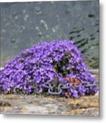 Flowers On The Stone Wall Metal Print