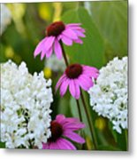 Flowers That Contrast Metal Print