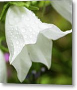Flowers With Droplets 3 Metal Print