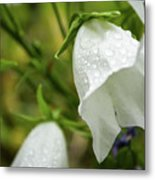 Flowers With Droplets 4 Metal Print