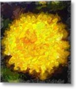 Flowery Acceptance In Abstract Metal Print