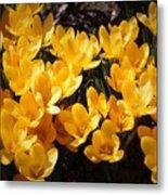 Flowery Sunshine Metal Print