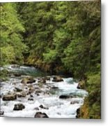 Flowing Through The Trees Metal Print