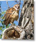 Fluffed Up Barn Owl Owlet Metal Print