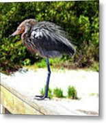 Shake It Off Metal Print