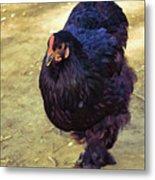 Fluffy Chicken Metal Print