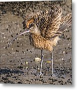 Fluffy Long-billed Curlew Metal Print