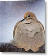 Fluffy Mourning Dove Metal Print