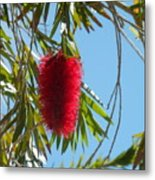 Fluffy Reds At The Library Metal Print