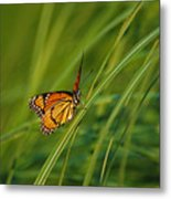 Fluttering Through The Summer Grass Metal Print