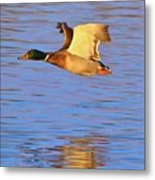 Fly And Reflect Art Prize-2 Metal Print