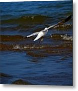 Fly Away Metal Print by Amanda Struz