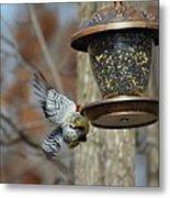 Fly Birds 326 Metal Print