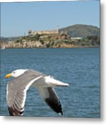 Fly By... Metal Print