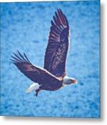 Fly By Eagle. 2 Of 3 Metal Print