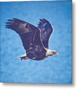 Fly By Eagle. 3 Of 3 Metal Print