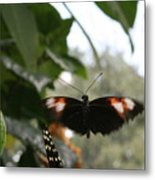 Fly Free - Black, Orange, White Butterfly Metal Print