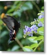 Fly In Butterfly Metal Print