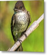 Fly In The Mouth Metal Print
