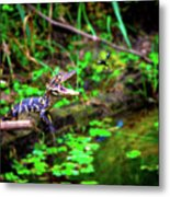 Fly Into My Mouth Please Metal Print