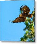 Fly Like An Eagle Metal Print