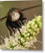 Fly Nectar Metal Print