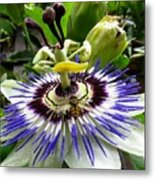 Fly On A Passion Flower Metal Print